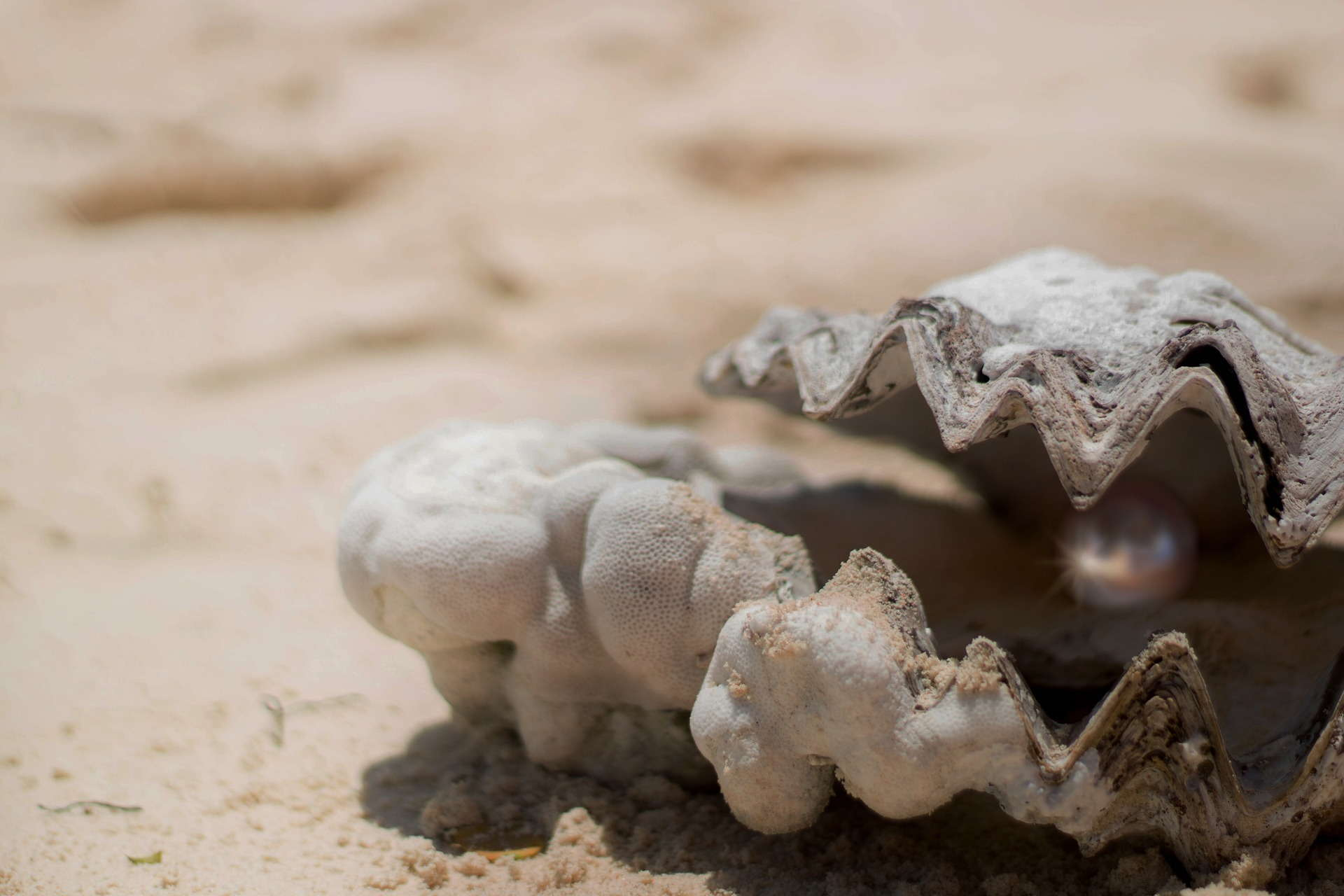 shell 1972980 1920 - Perły w maskach i ich właściwości