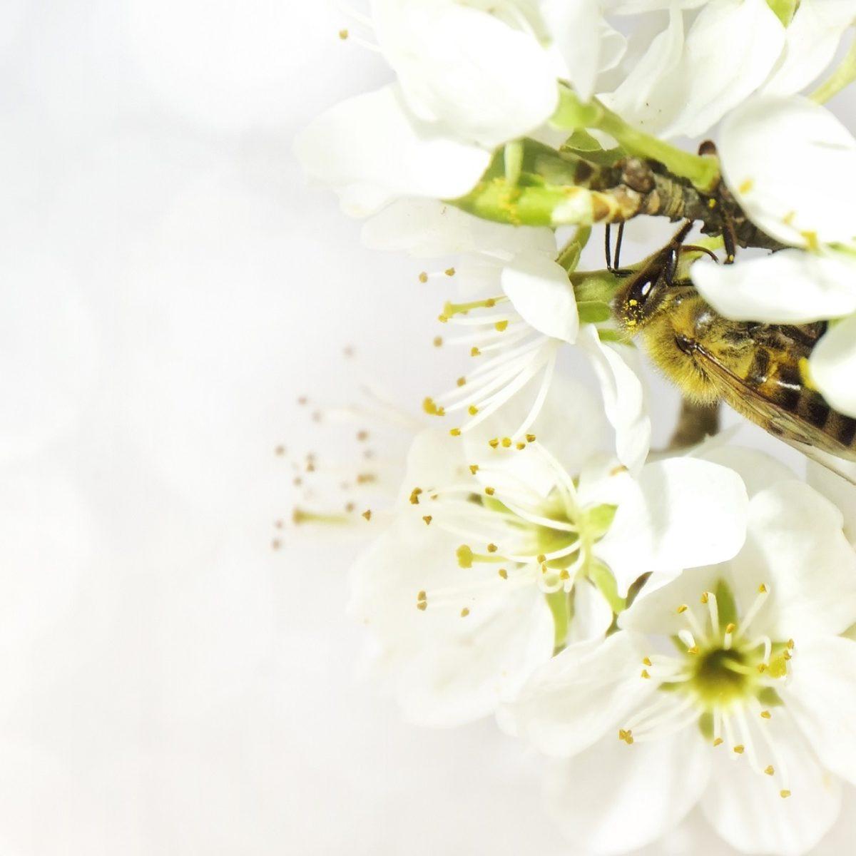 Jad pszczeli w kosmetyce